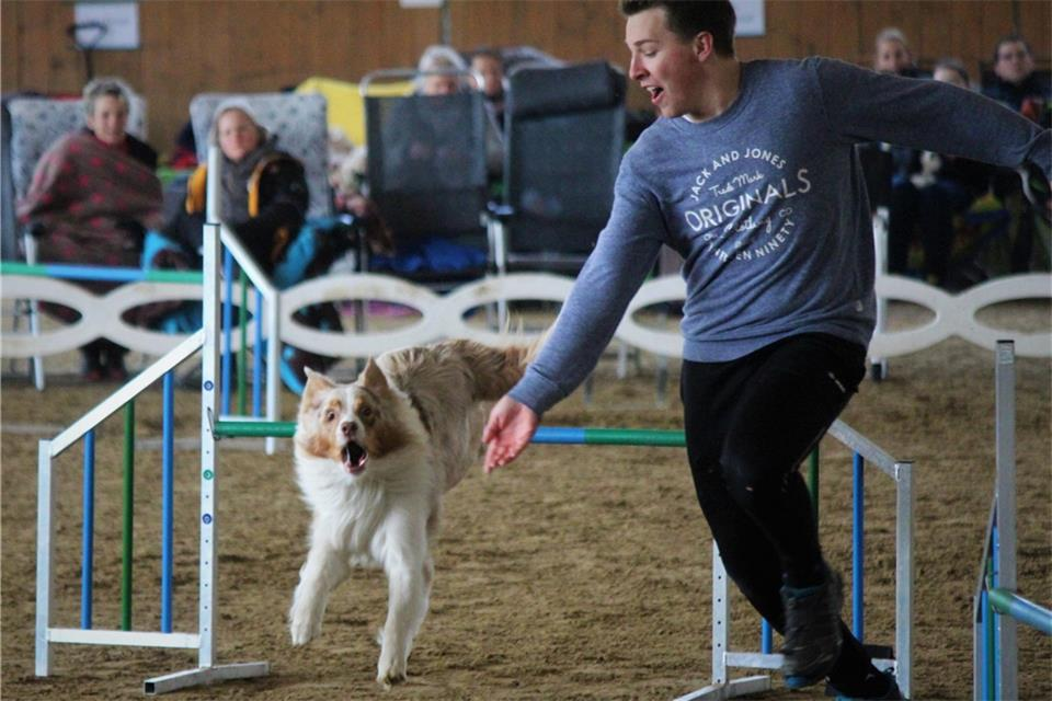 Geschickte Hunde im Agility-Parcours