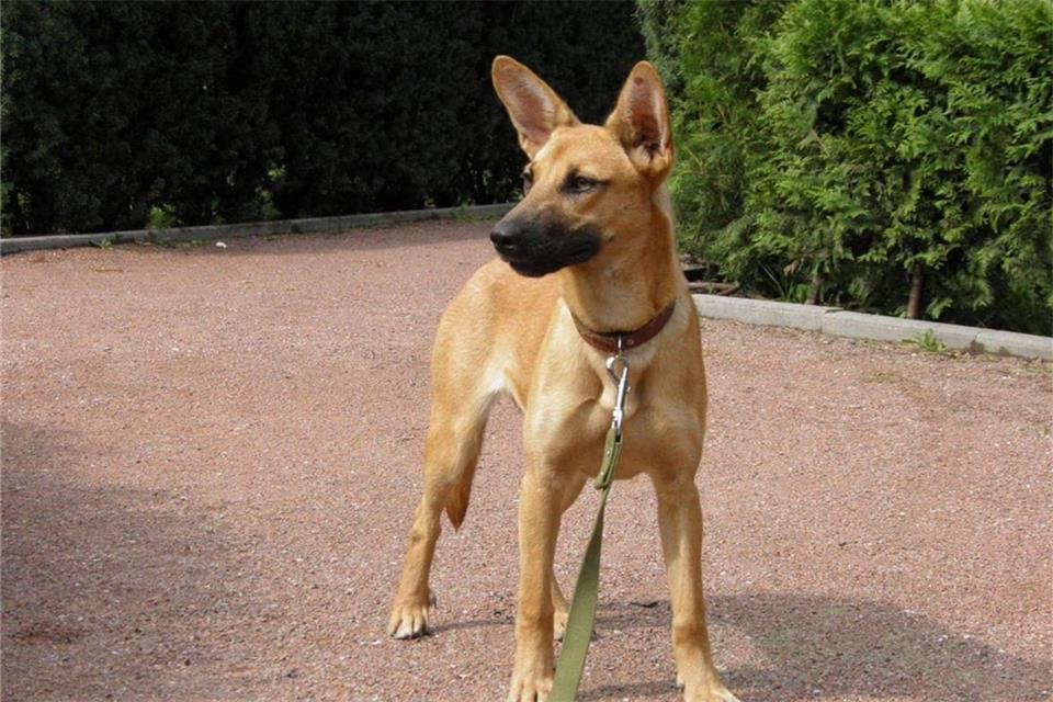 tierheim bocholt hunde