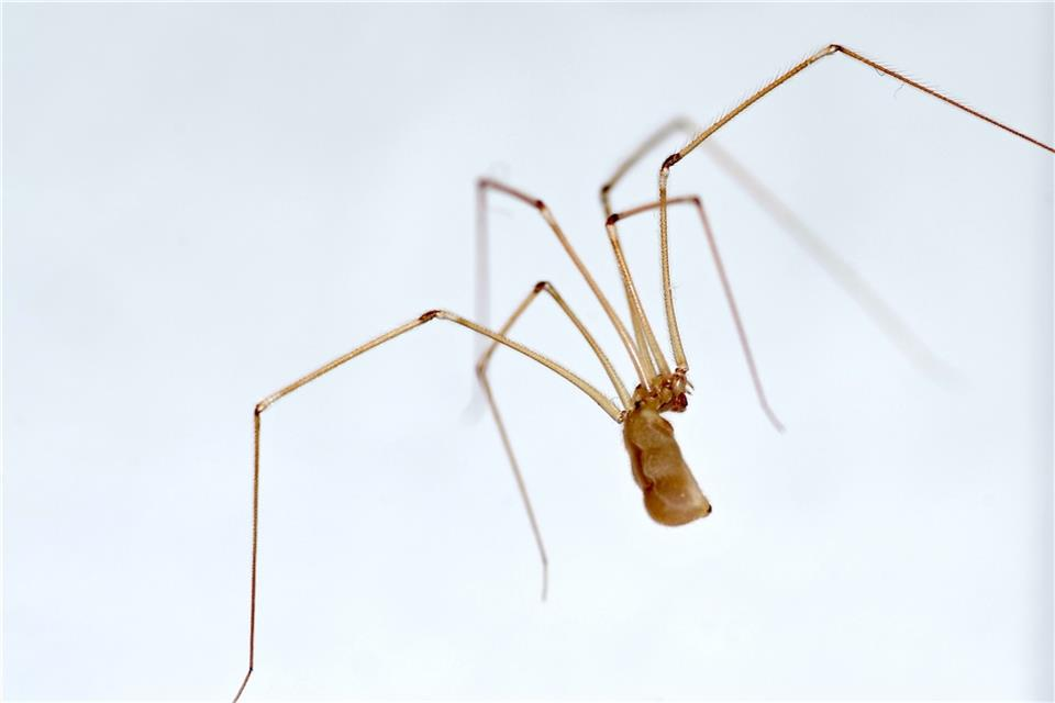Jetzt Kommen Die Spinnen Ins Haus